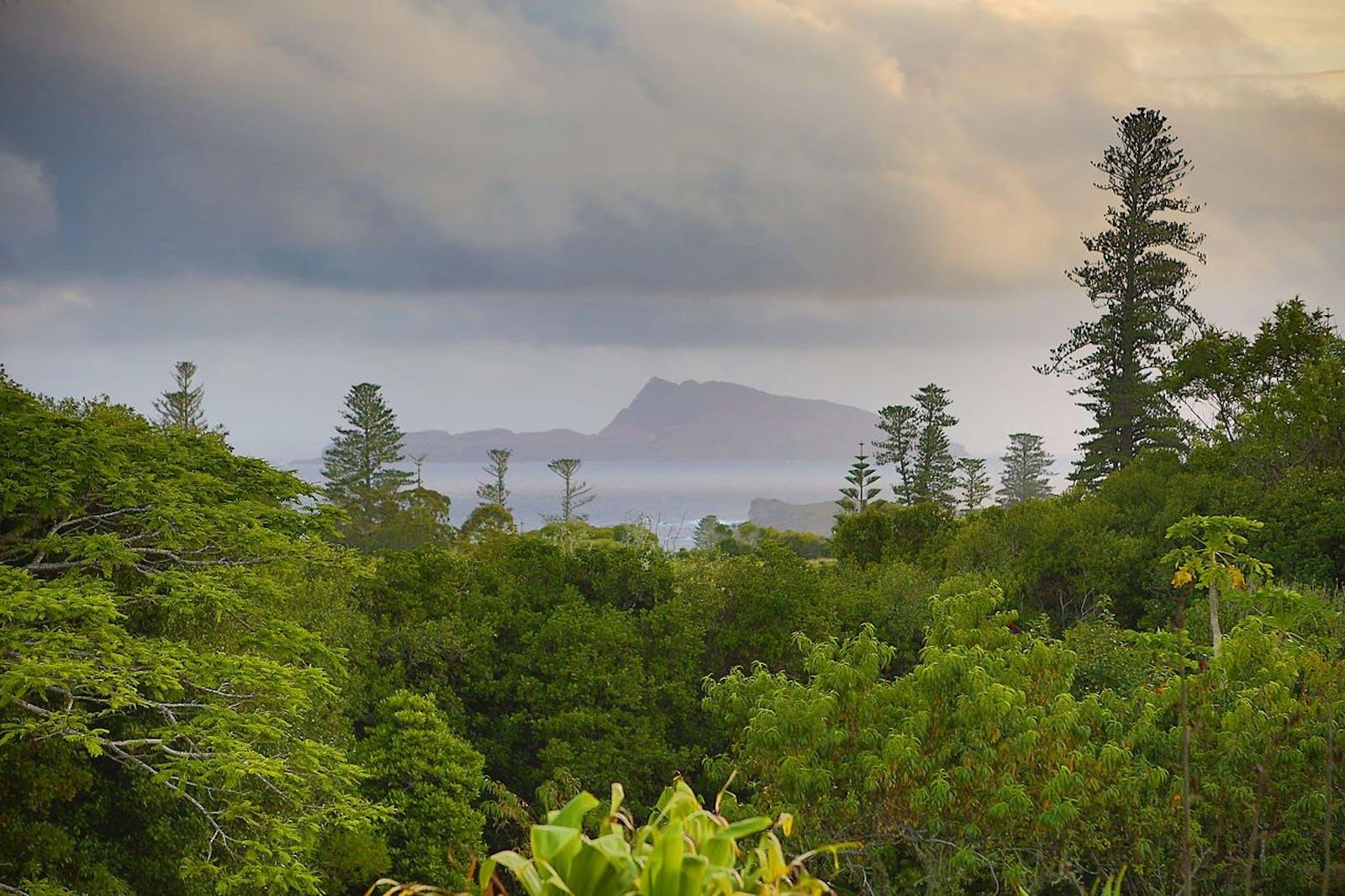 Norfolk Island Subtropical Forests