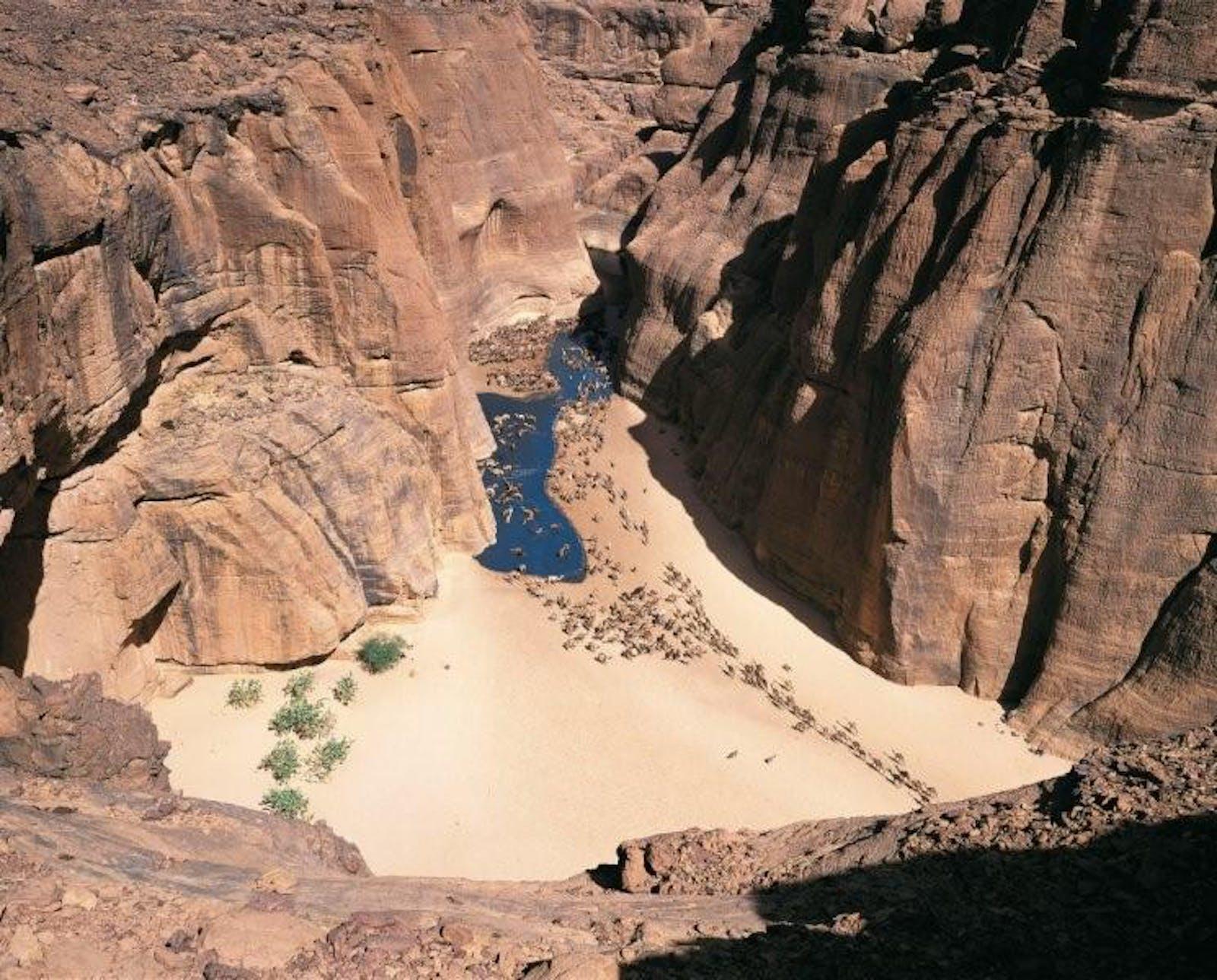 East Saharan Montane Xeric Woodlands
