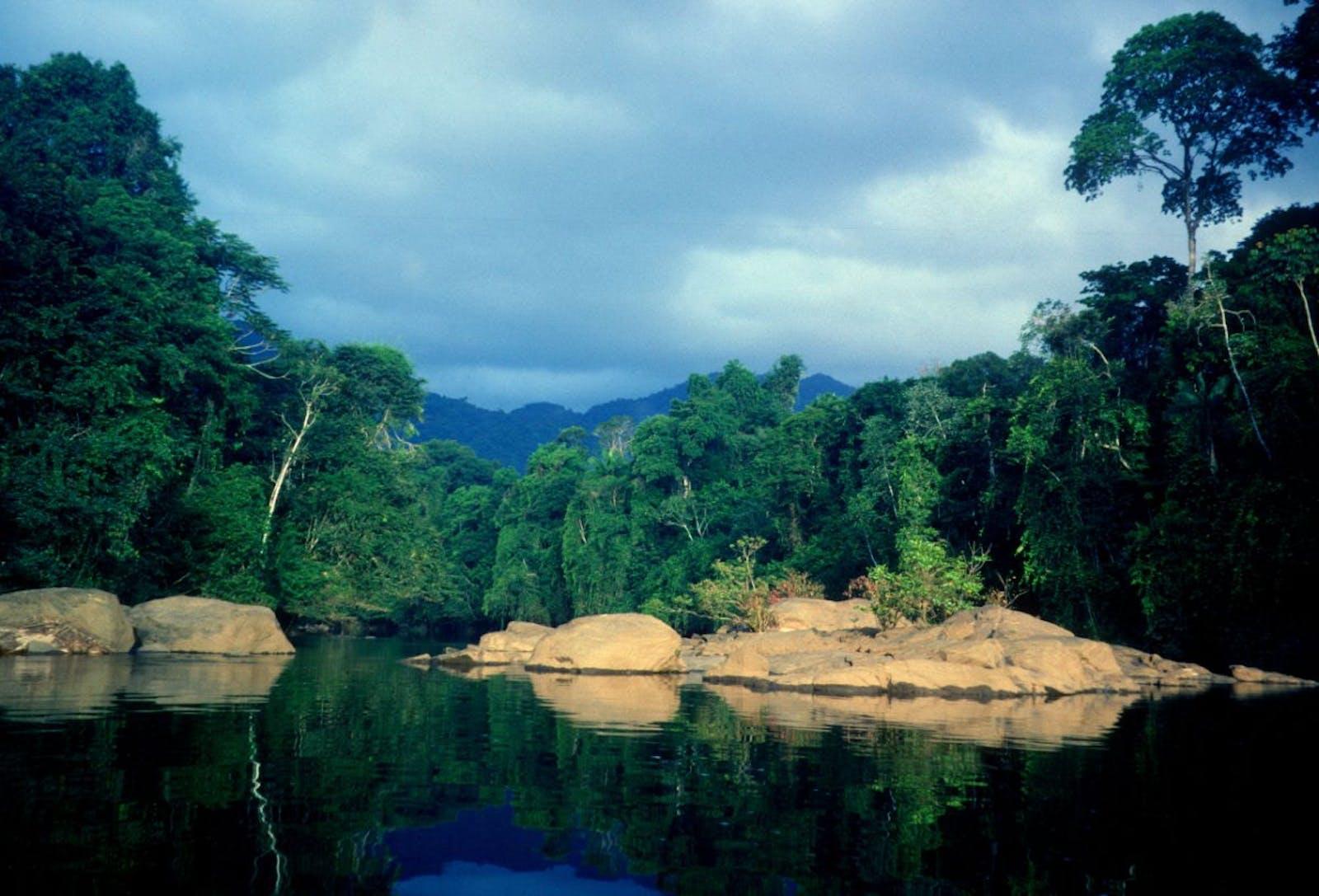 Guianan Piedmont Moist Forests