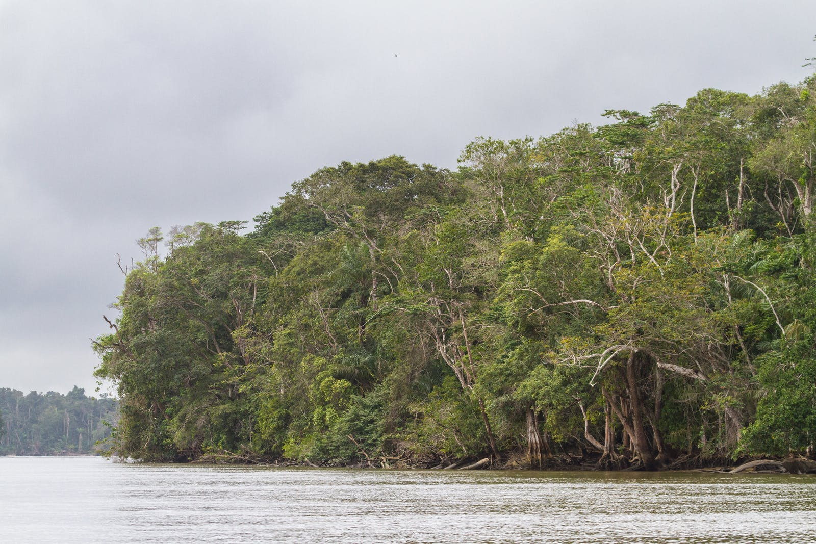 Congolian Coastal Forests