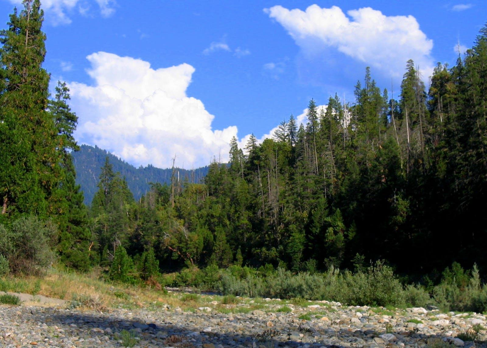 Northern California Coastal Forests