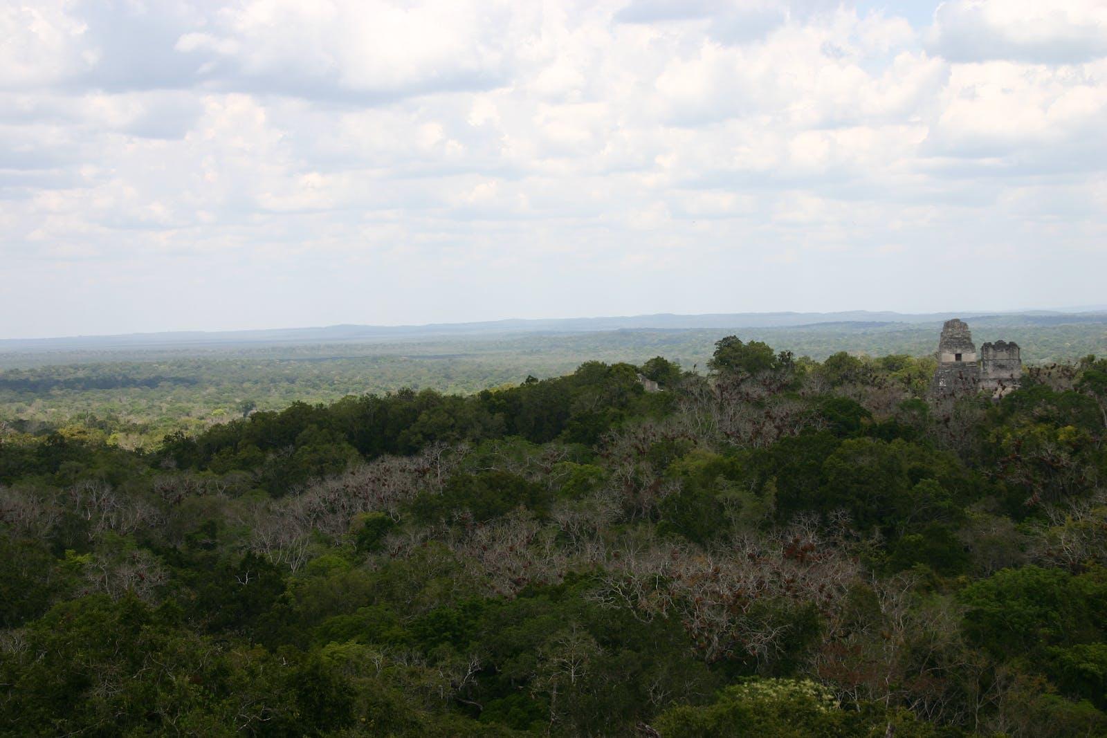 Petén-Veracruz Moist Forests