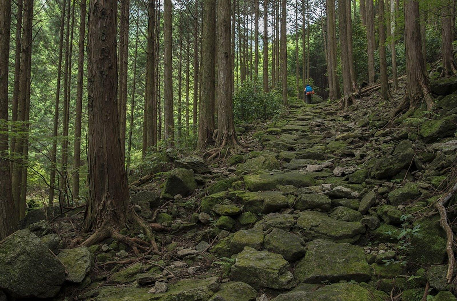 Taiheiyo Evergreen Forests