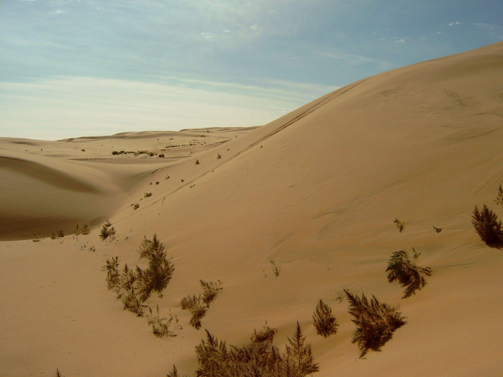 Eastern Gobi Desert Steppe