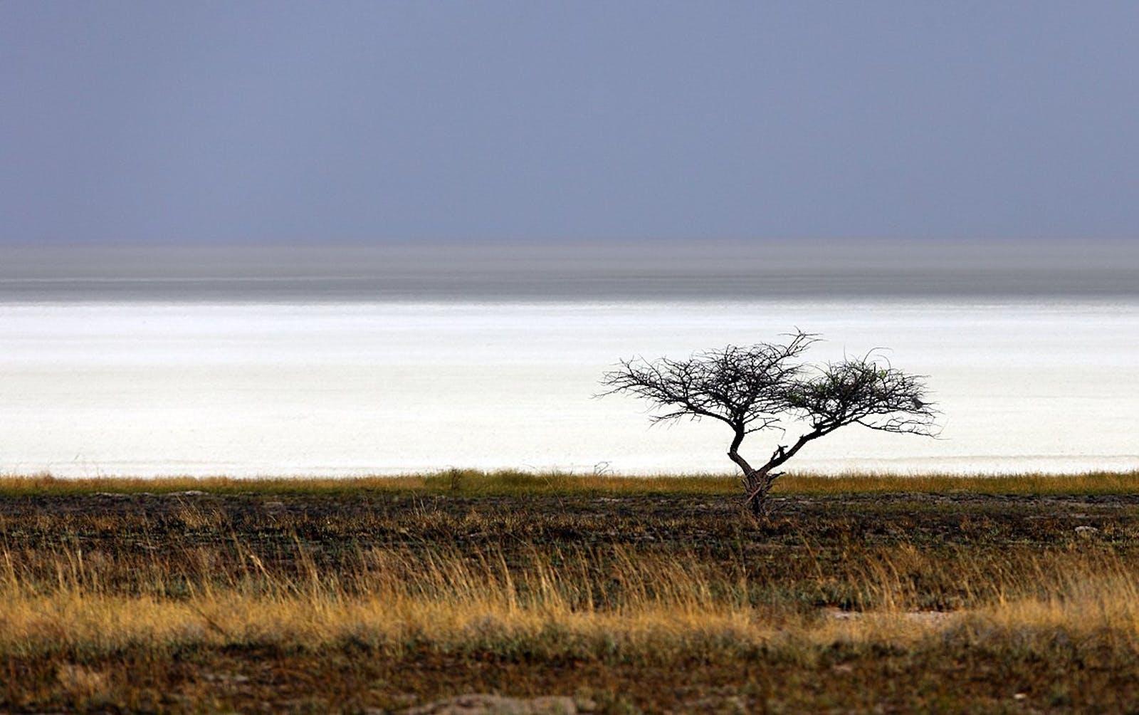 Kaokoveld Desert