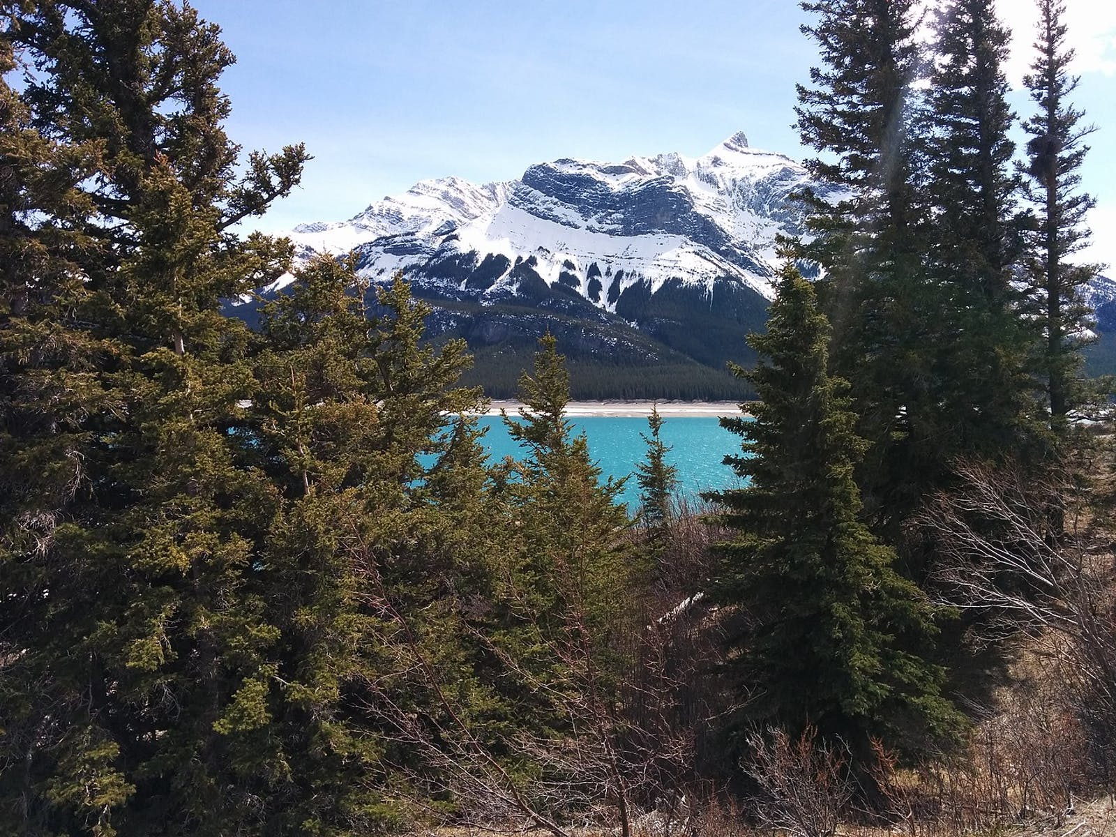 Alberta-British Columbia Foothills Forests