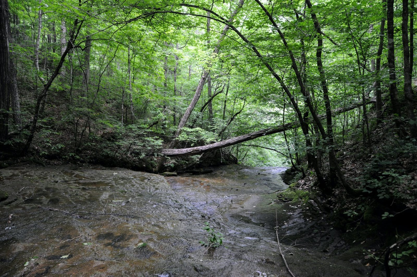Interior Plateau US Hardwood Forests
