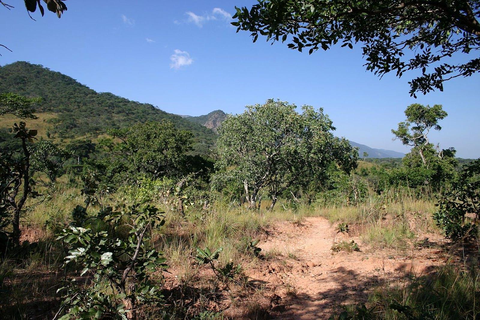 Central Zambezian Wet Miombo Woodlands