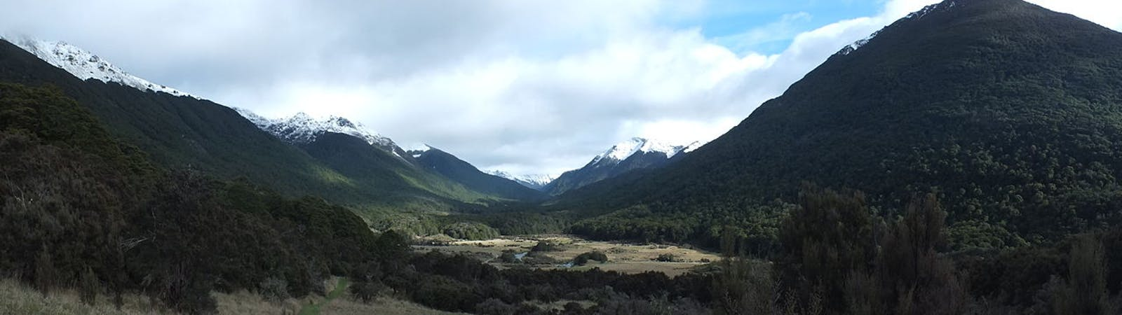 Nelson Coast temperate forests