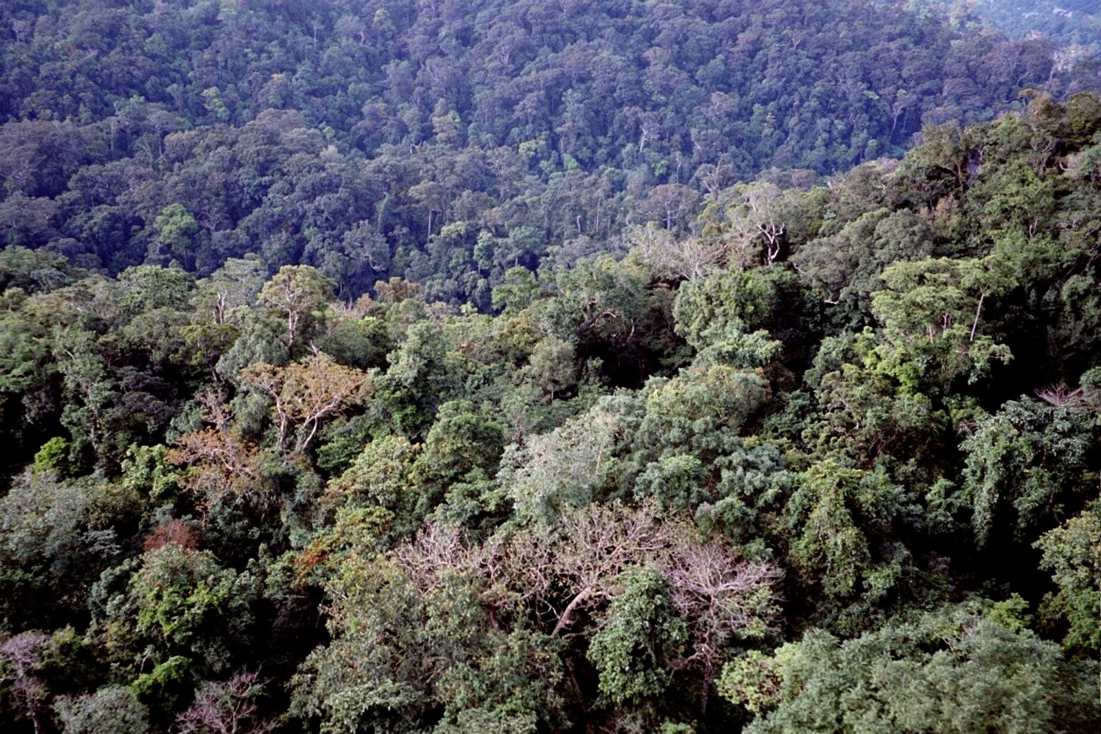 Mindanao-Eastern Visayas Rainforests