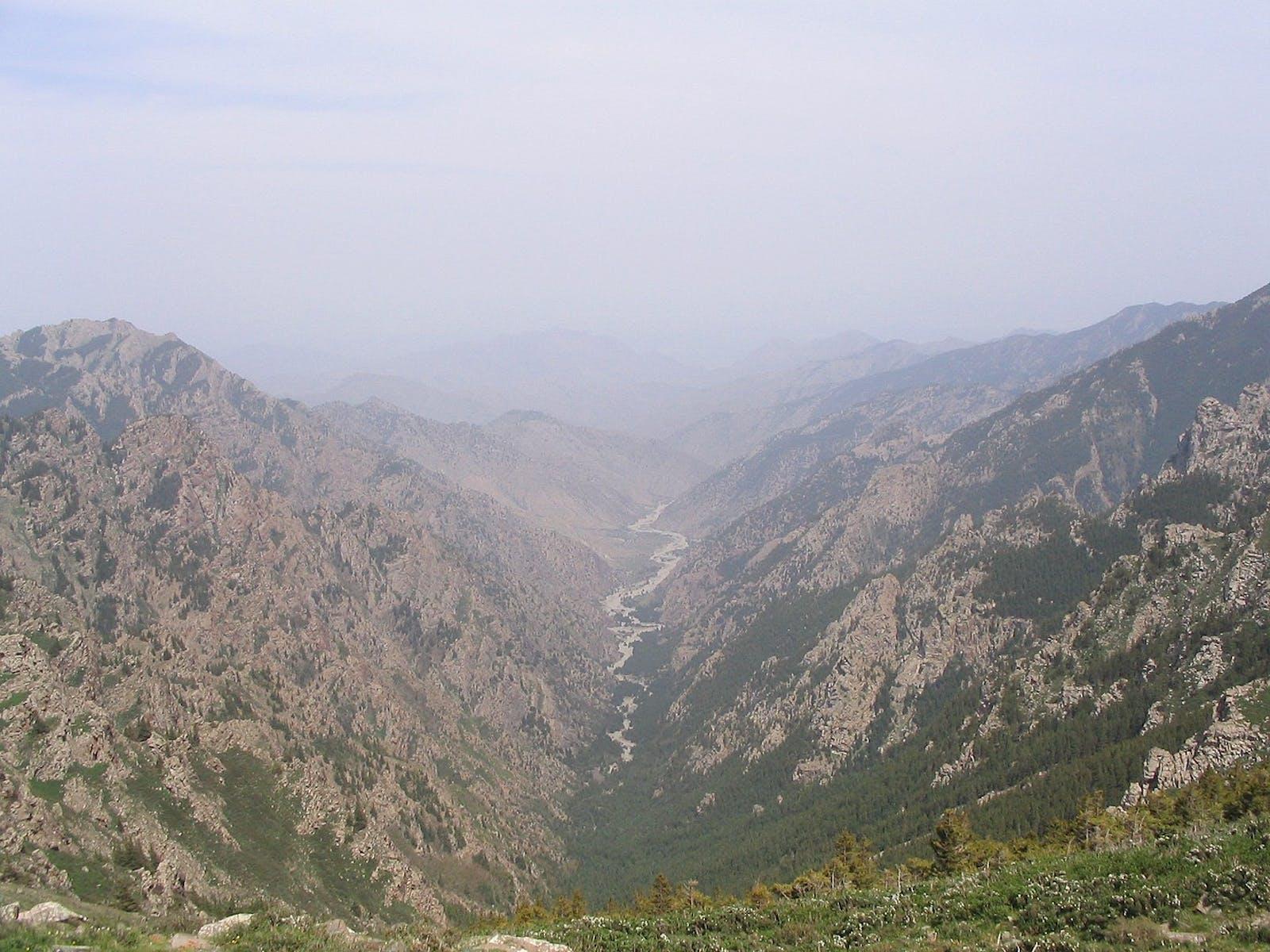 Helanshan Montane Conifer Forests