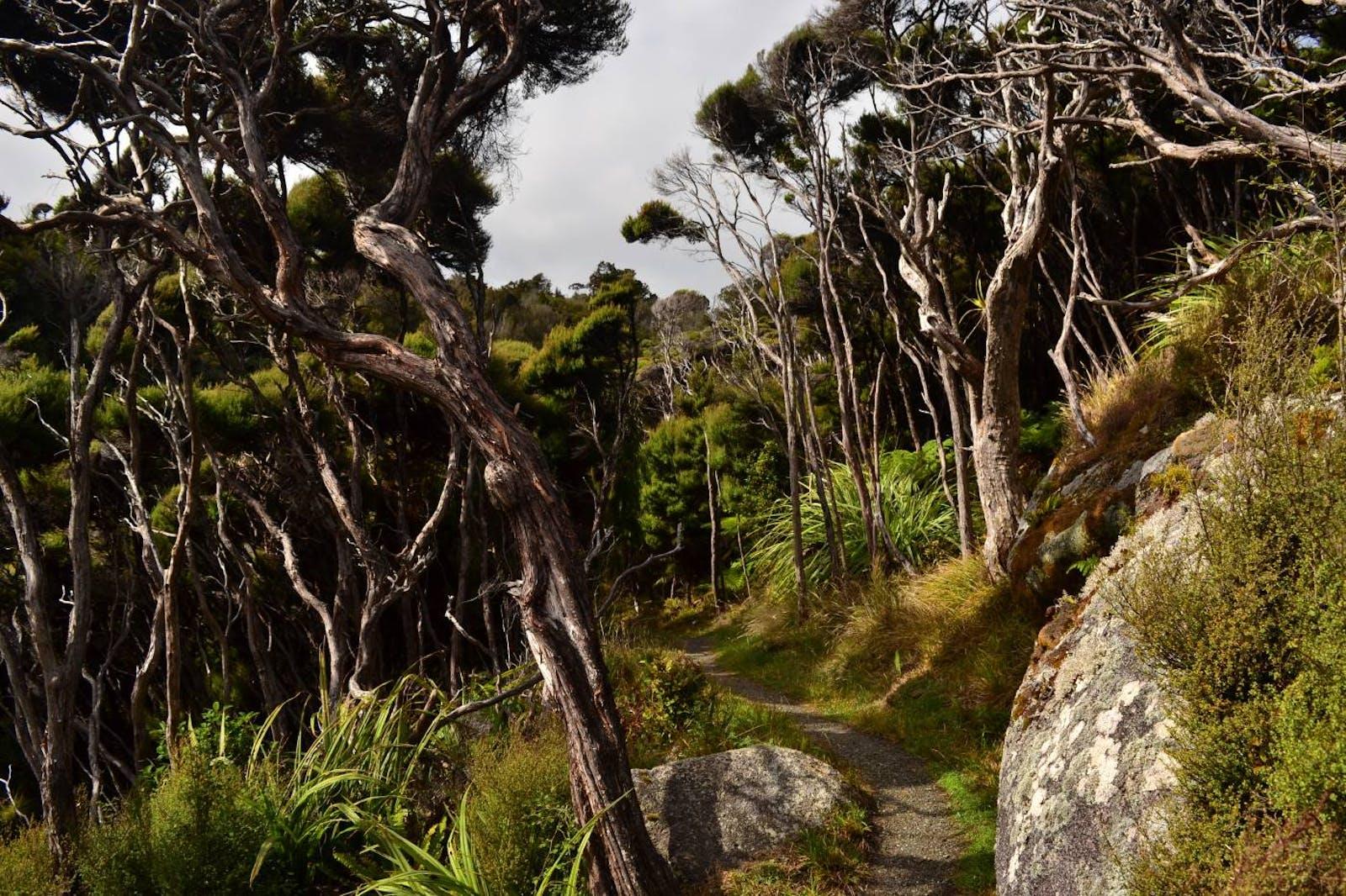 Rakiura Island Temperate Forests