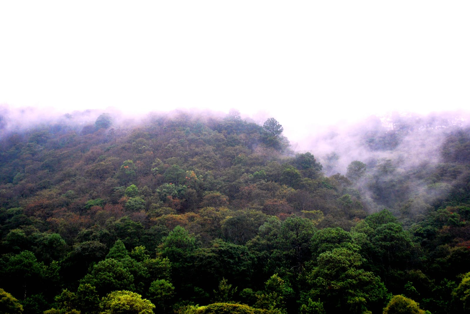 Central American Pine-Oak Forests