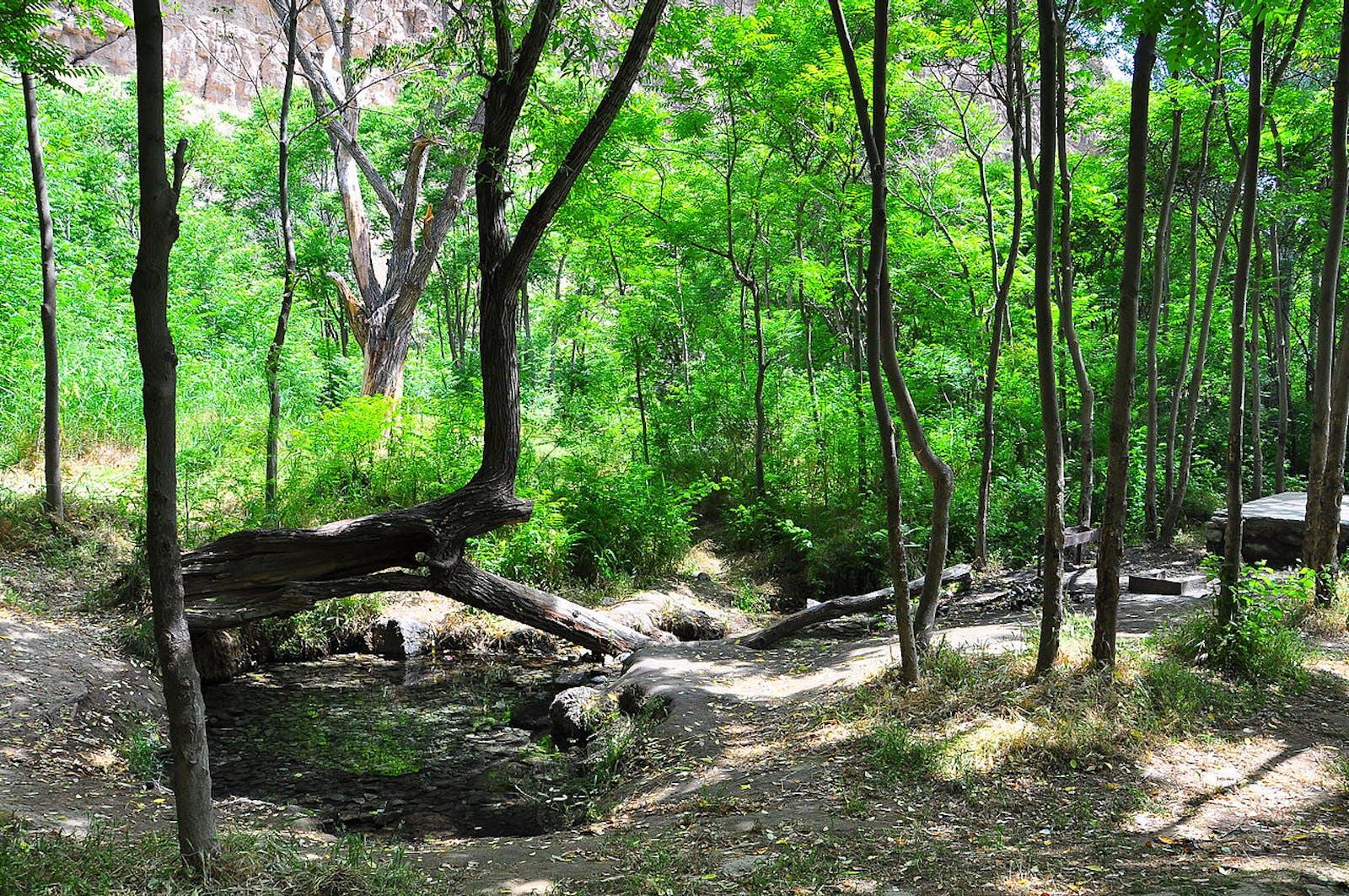 Kopet Dag Woodlands and Forest Steppe