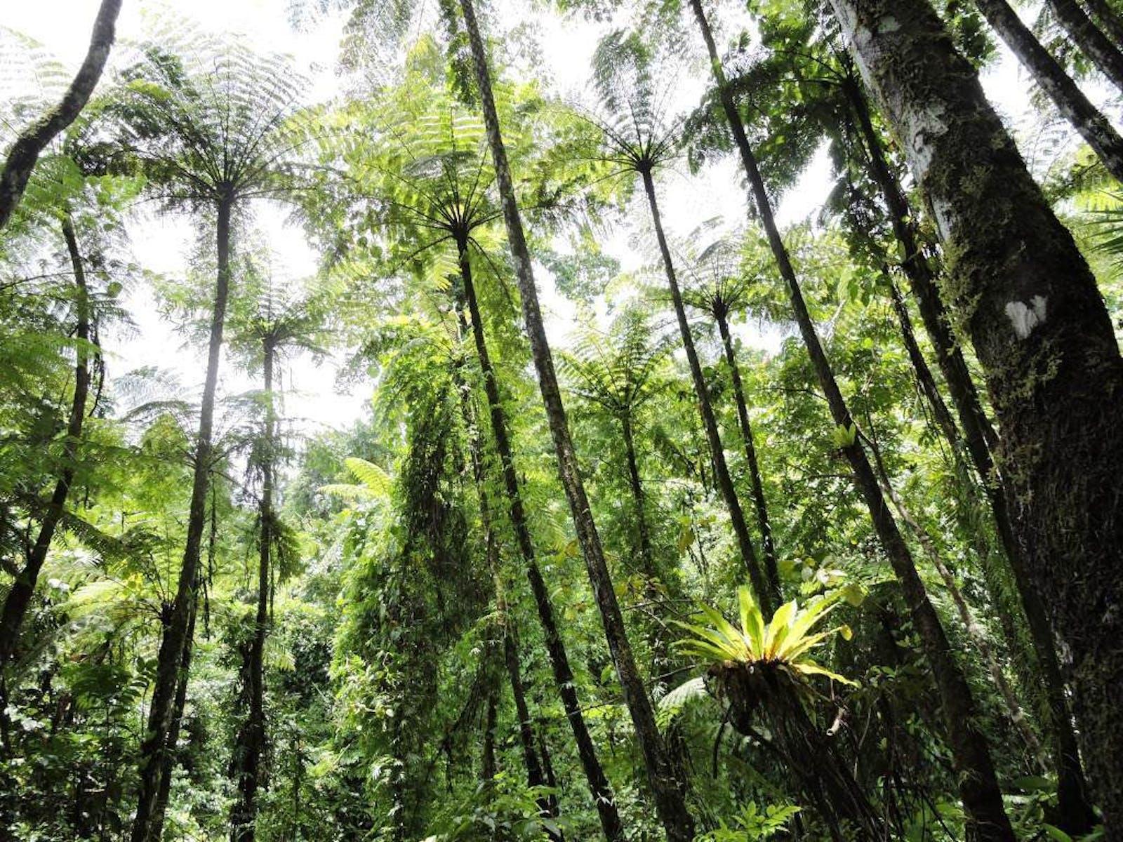 Nicobar Islands Rainforests