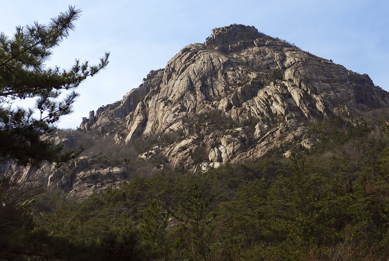 Southern Korea Evergreen Forests