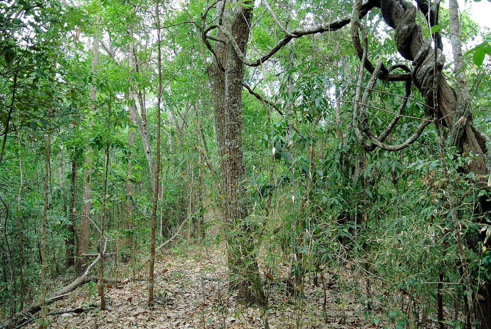 Kayah-Karen Montane Rainforests