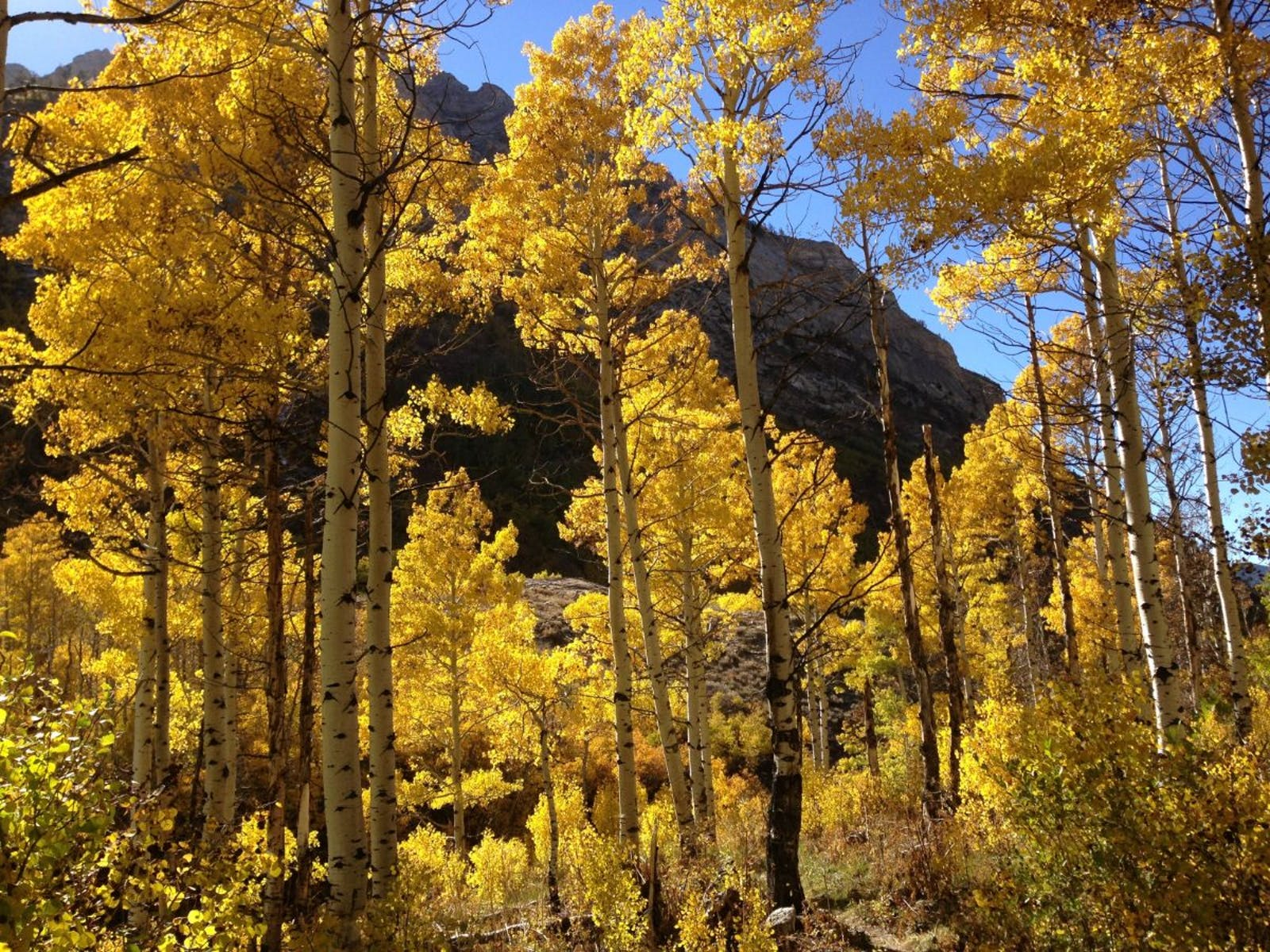 Arizona Mountains Forests