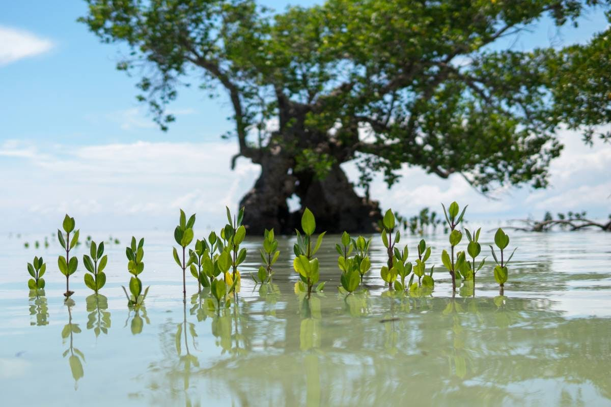 Women are leading the charge rewilding mangroves in Cambodia