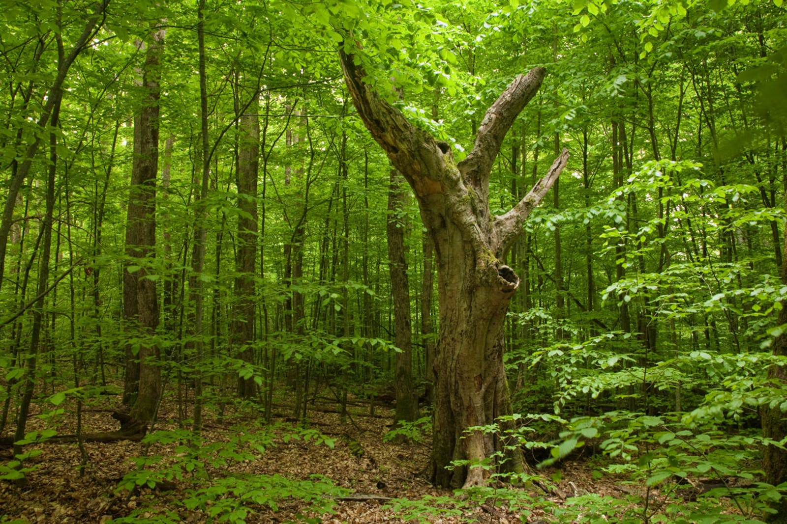 Euxine-Colchic Broadleaf Forests