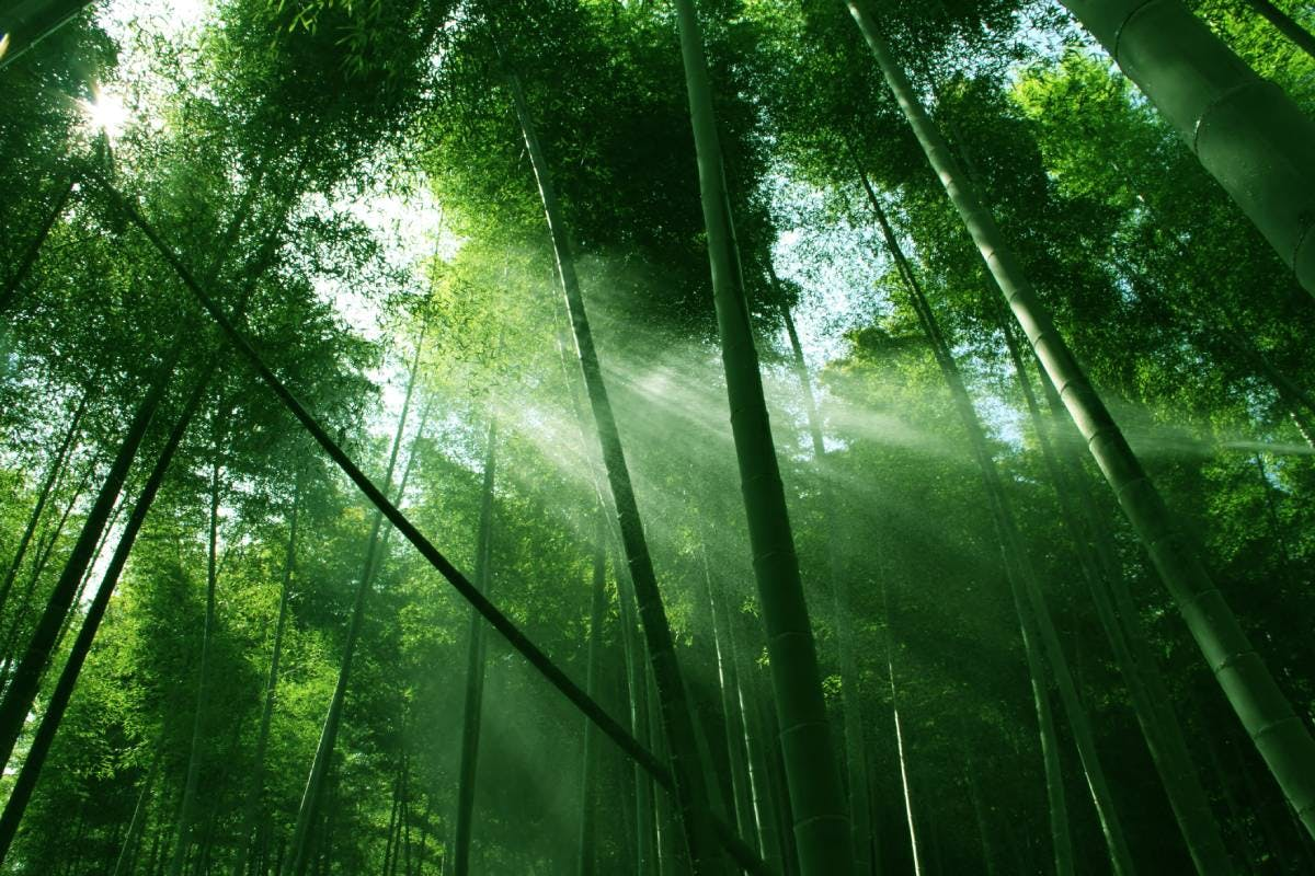 The wonders of bamboo groves
