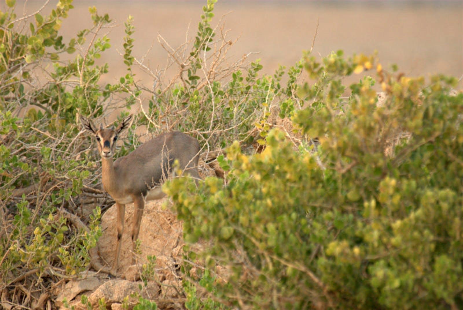 Southwest Arabian Coastal Xeric Shrublands