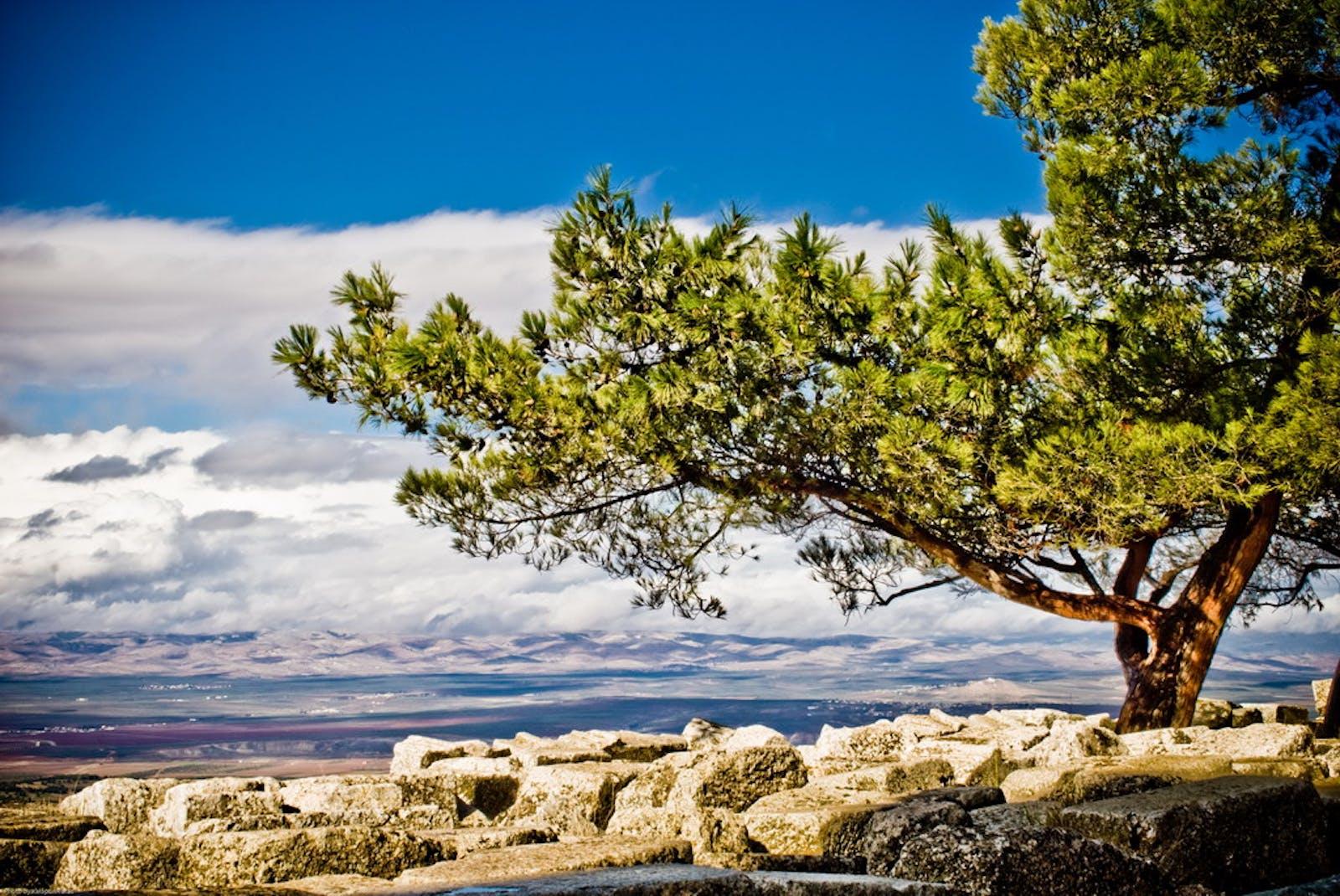 Eastern Mediterranean Conifer-Broadleaf Forests
