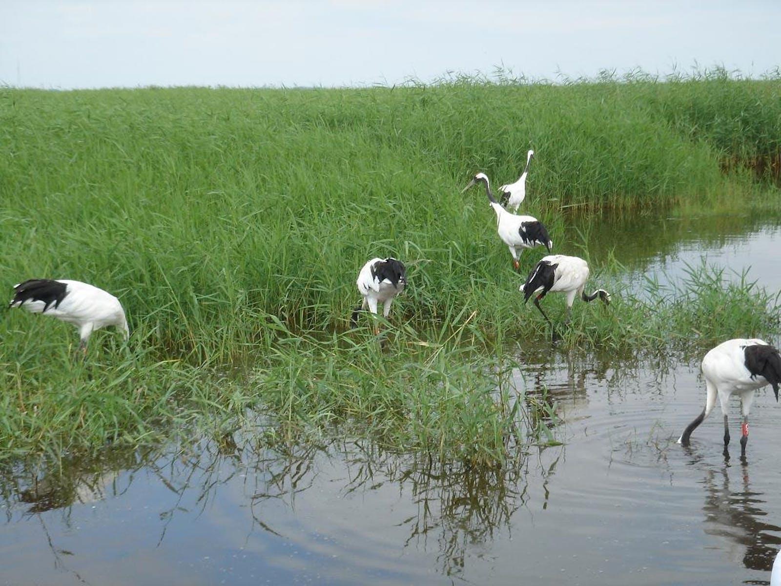 Nenjiang River Grassland