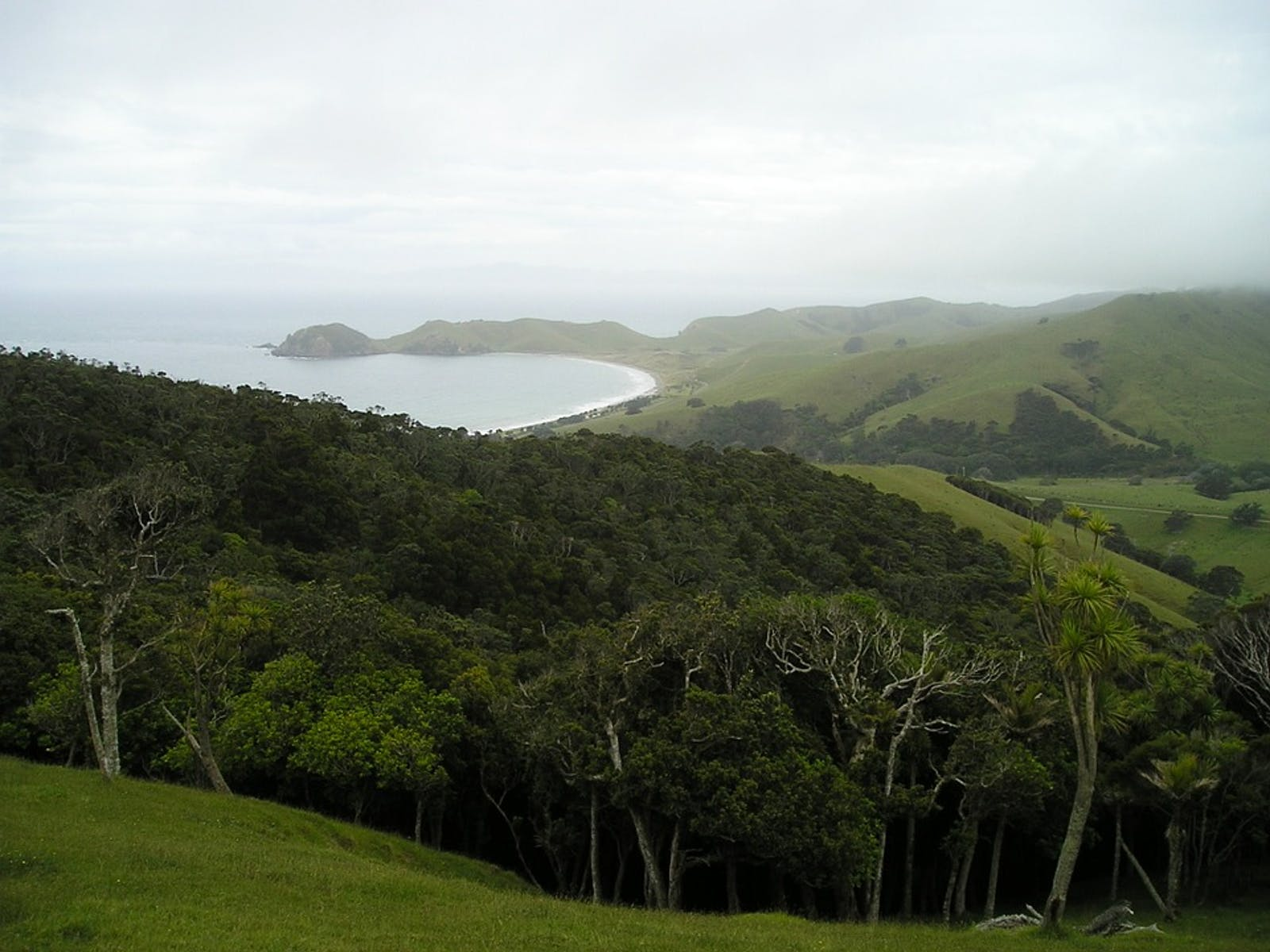 Northland Temperate Kauri Forests