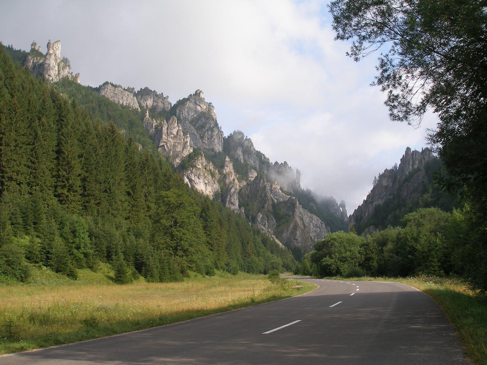 Carpathian Montane Forests