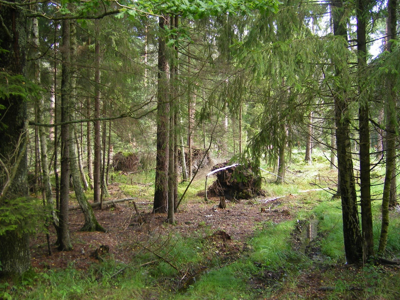 Central European Mixed Forests