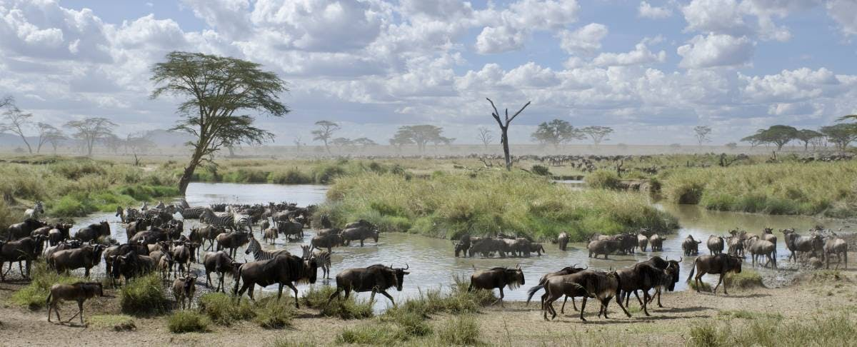 Launching the UN Decade of Ecosystem Restoration with the Rewilding & Climate Initiative