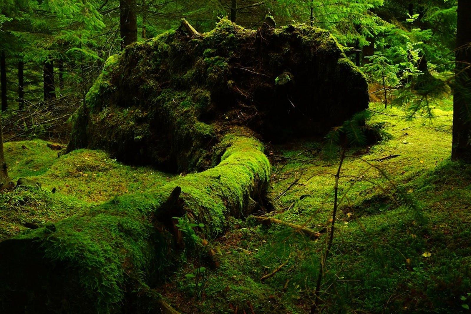 Scandinavian Coastal Conifer Forests