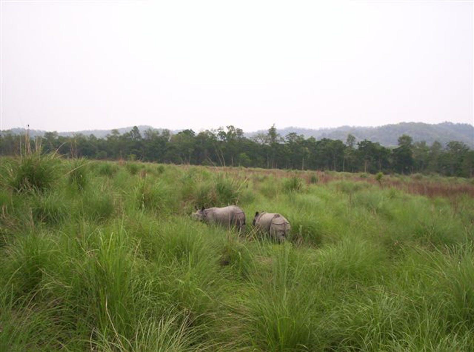 Terai-Duar Savanna and Grasslands