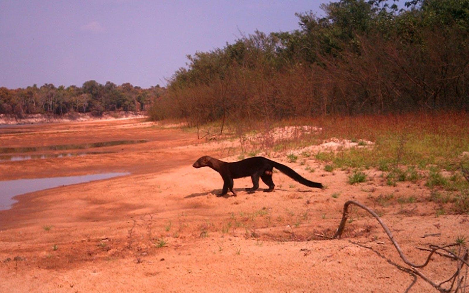 Xingu-Tocantins-Araguaia Moist Forests