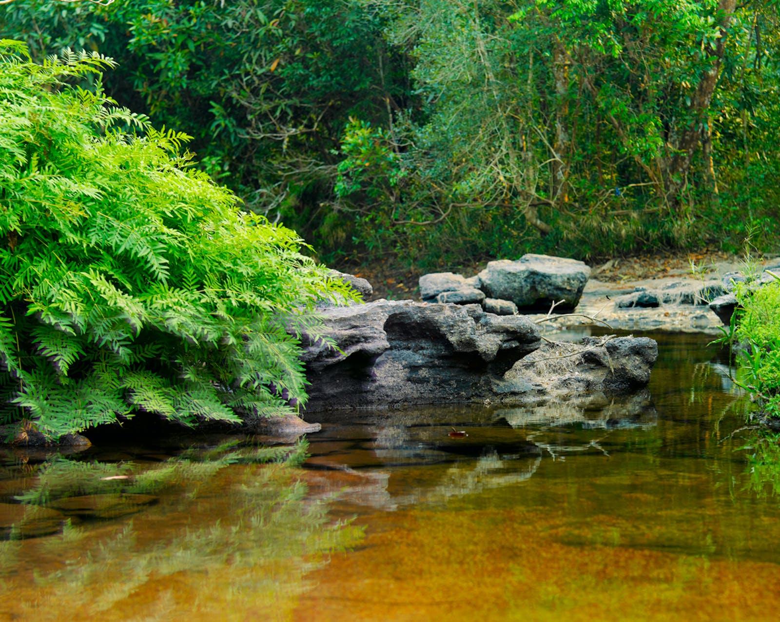 Luang Prabang Montane Rainforests