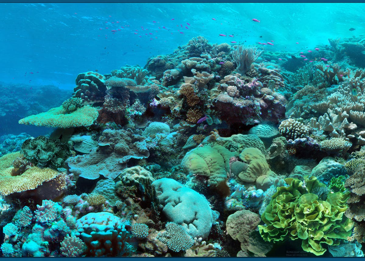 How Belize saved its coral reefs