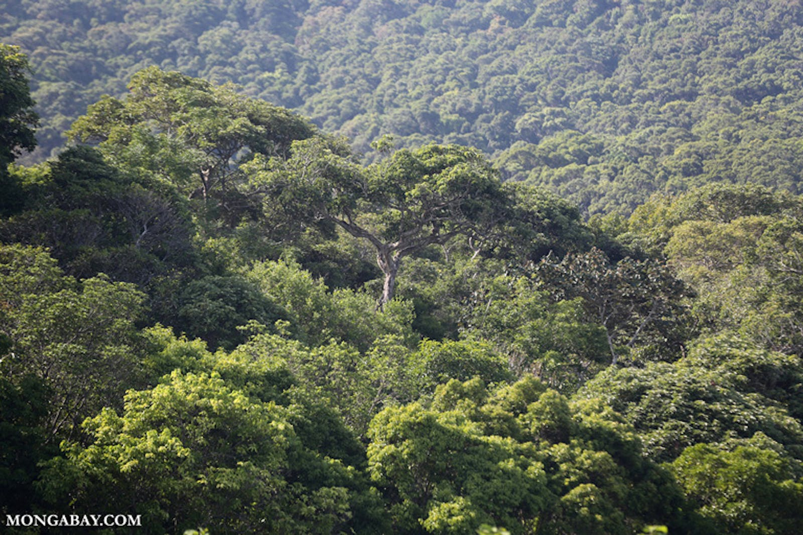 Southern Vietnam Lowland Dry Forests