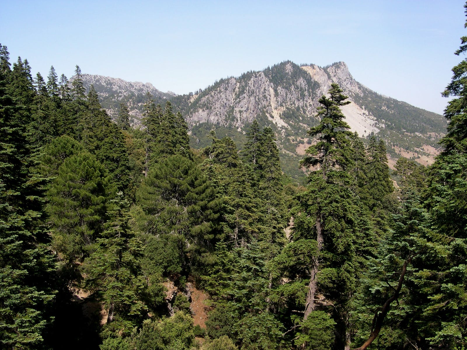 Mediterranean Conifer and Mixed Forests