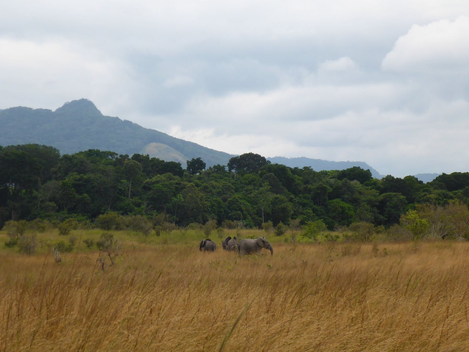 Western Congolian Forest-Savanna