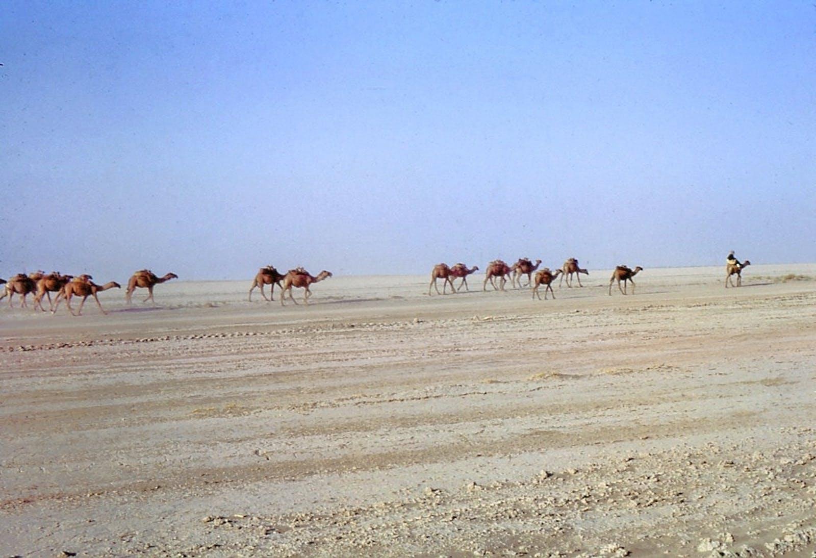 Registan-North Pakistan Sandy Desert