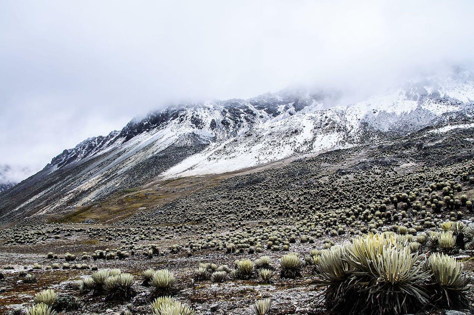 Cordillera De Merida Páramo