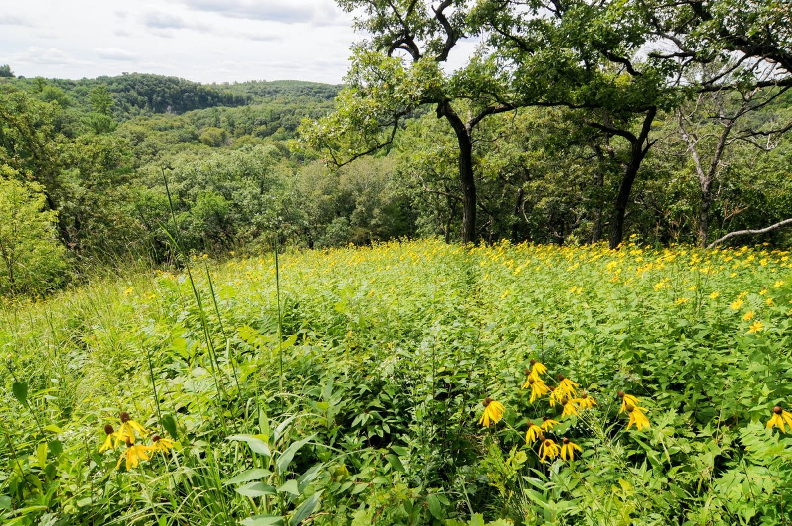 Upper Midwest US Forest-Savanna Transition