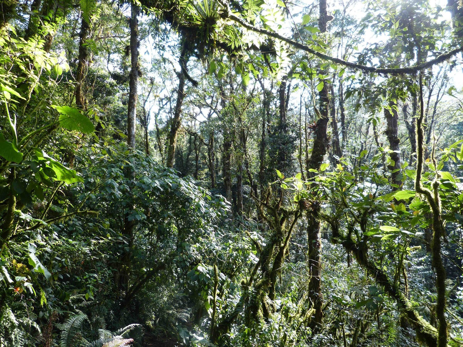 Talamancan Montane Forests