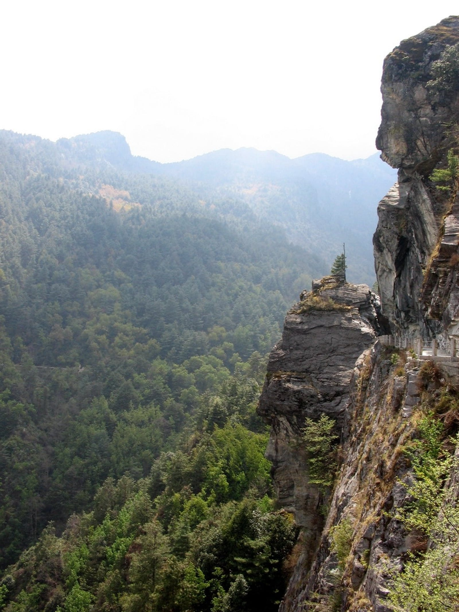 Yunnan Plateau Subtropical Evergreen Forests