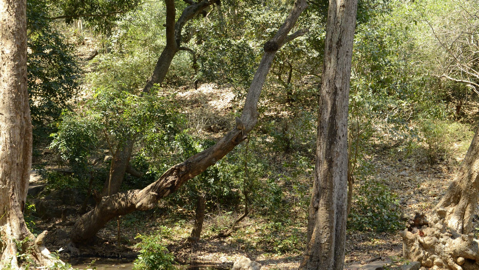 Central Deccan Plateau Dry Deciduous Forests
