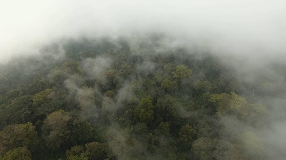 Nature Needs Half Webinar - Motion 101