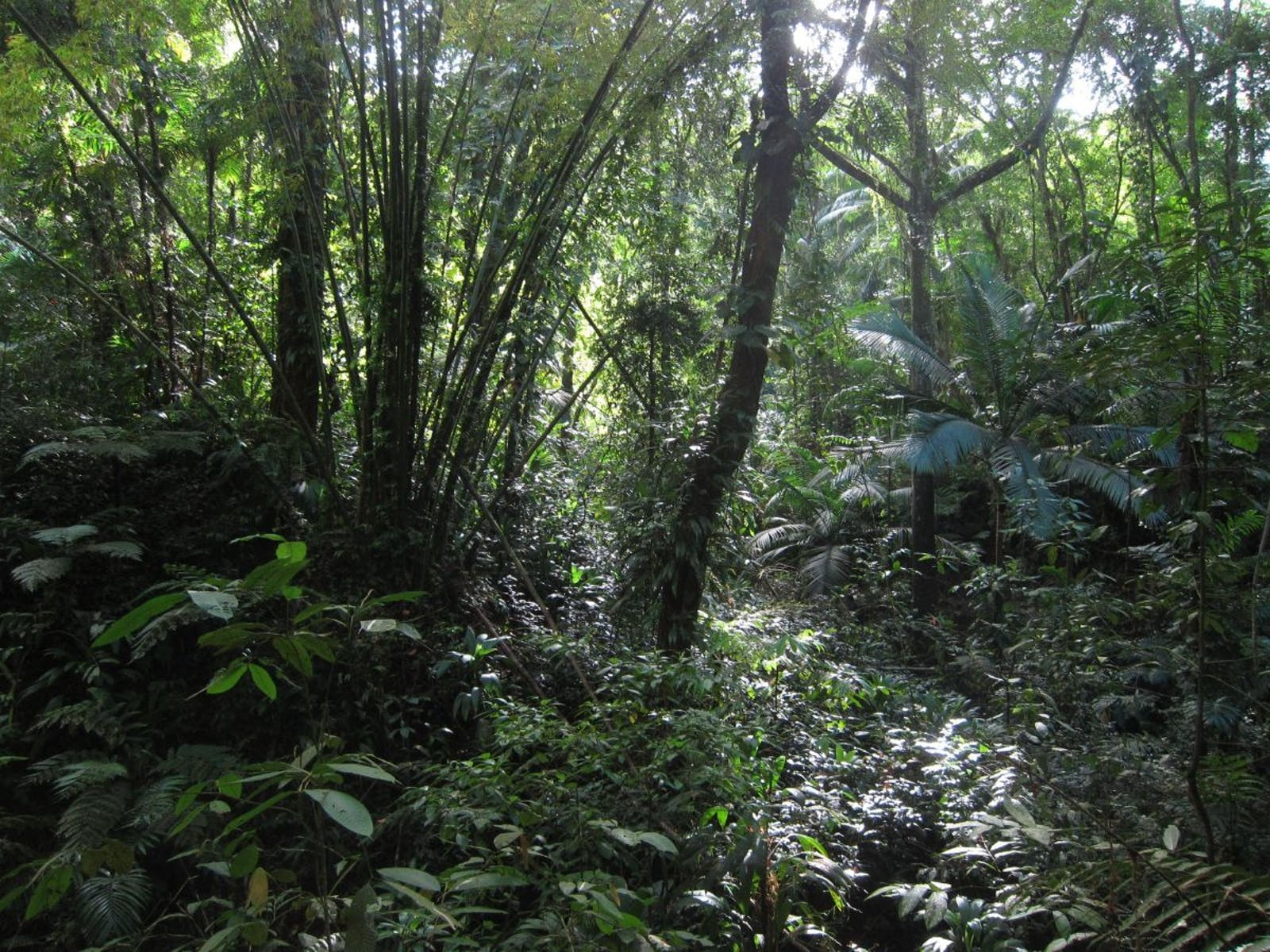Trinidad and Tobago Moist Forest