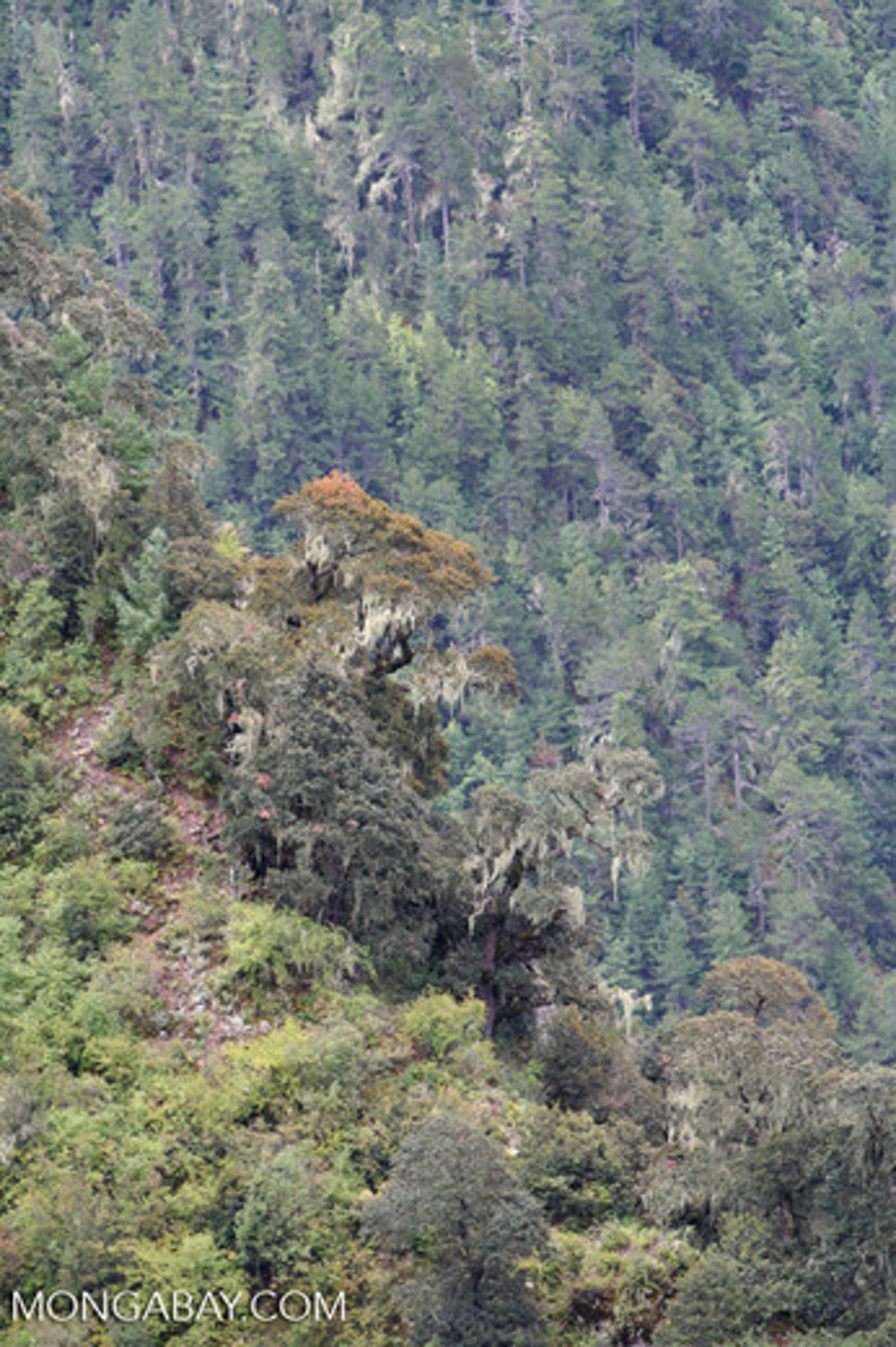 Nujiang Lancang Gorge Subalpine Conifer and Mixed Forests