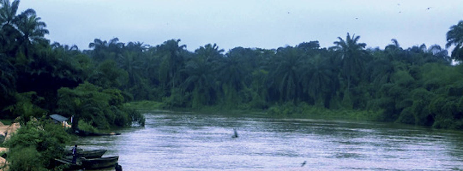 Cross-Niger Transition Forests